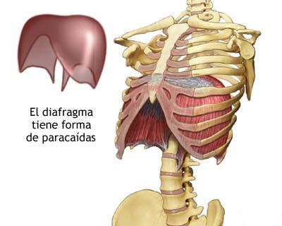 El Musculo de la respiracion